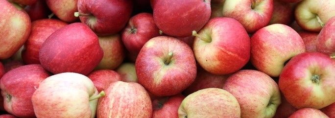 http://www.bustle.com/articles/39482-where-to-go-apple-picking-in-america-the-10-best-places-to-enjoy-the-fruit-of