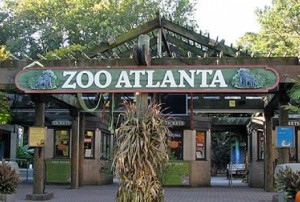 daytrip-atlanta-zoo