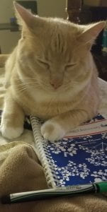 Large Orange & White cat laying on top of a GSU academic planner with eyes closed in deep though.