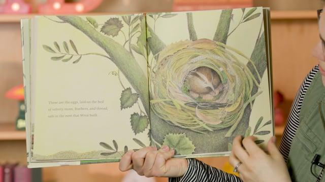 Screencap taken from Birds & Birdwatching Preschool Storytime Online - Episode 26