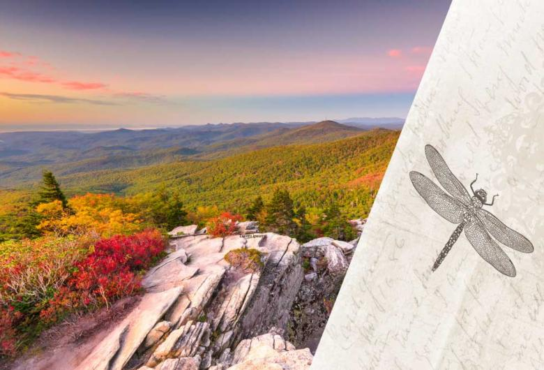 pic of North Carolina and dragonfly associated with Outlander books