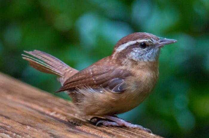 brown bird on wood