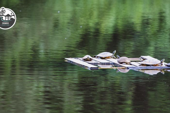 turtles on pond float