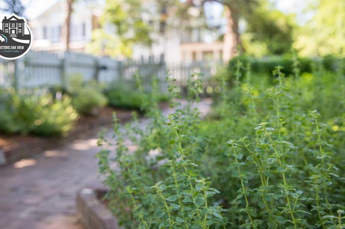 green herb garden