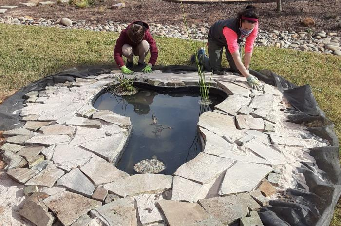 Lincoln Heights staff and students install a frog pond on campus