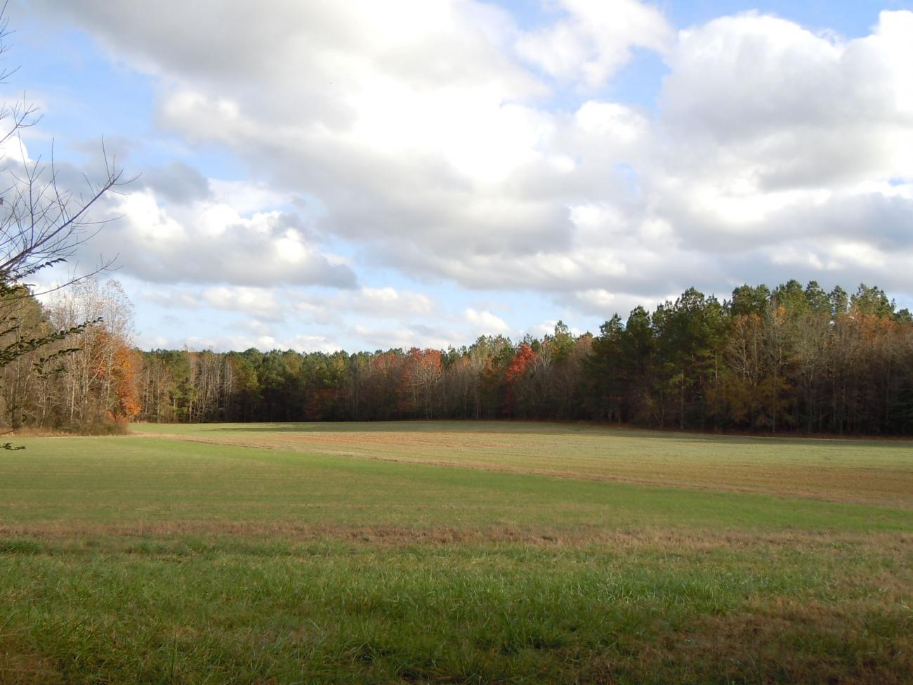 green meadows in front of a forest with some fall foliage