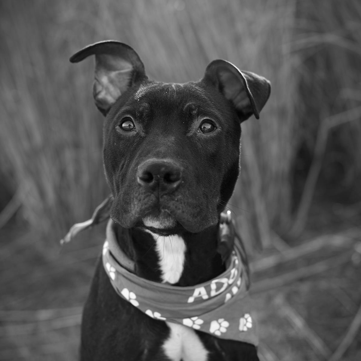 Black and white photo of dog sitting looking at camera