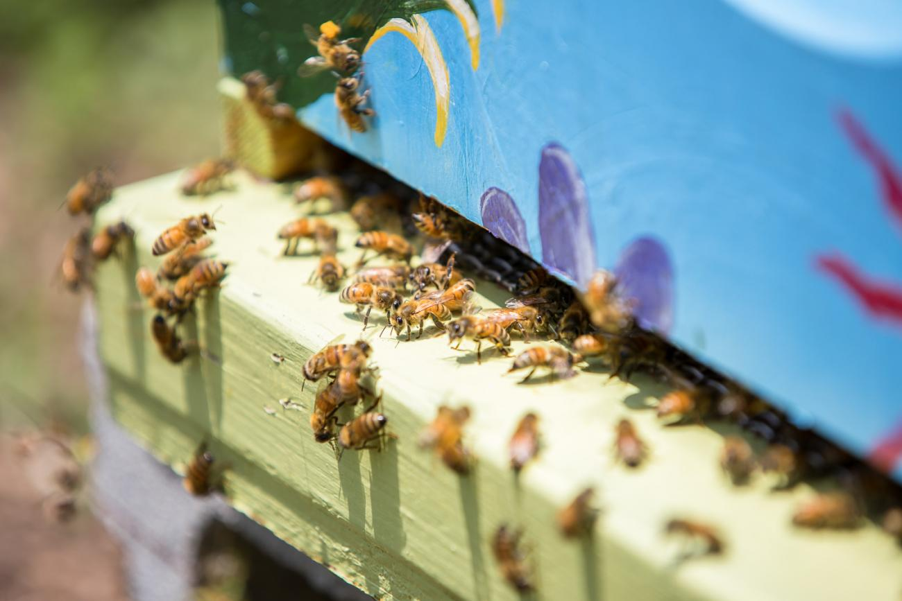 close up on beehives at Oak View