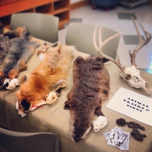 animal pelts and skulls on table