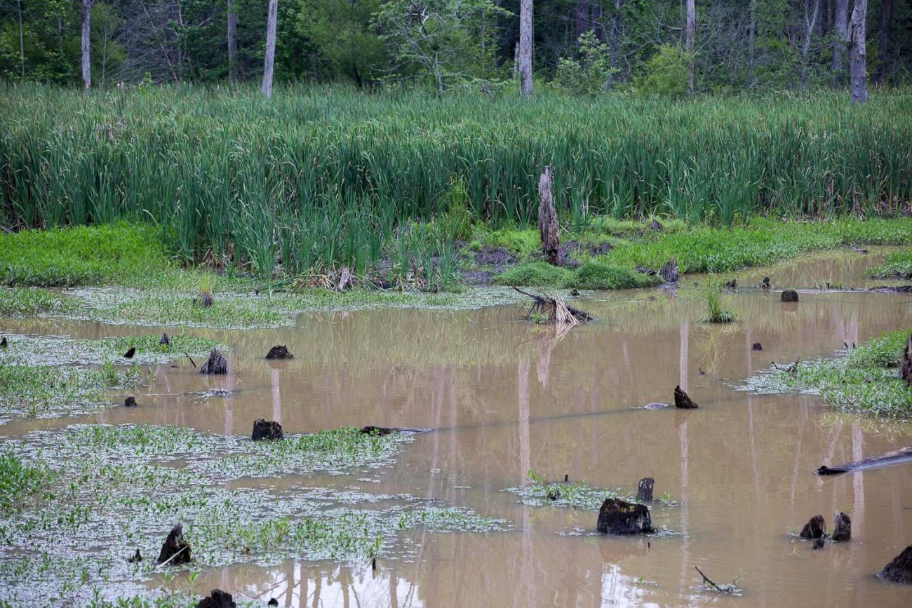 Photo of a portion of the Beaver Creek wetland area along the American Tobacco Trail