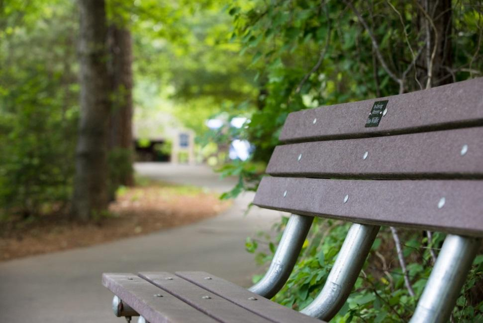 Empty park bench with trails and trees in the background