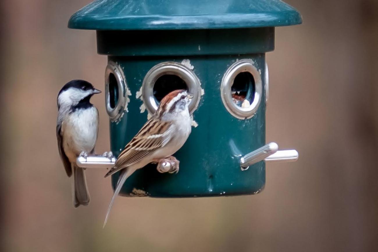 two birds perch on bird feeder