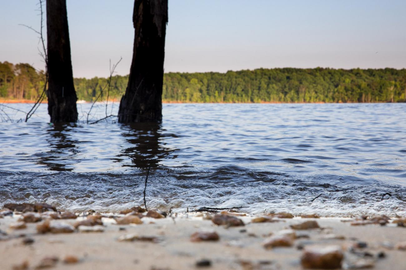 Ground level photo of shoreline looking out into the lake with a couple trees standing in the water.