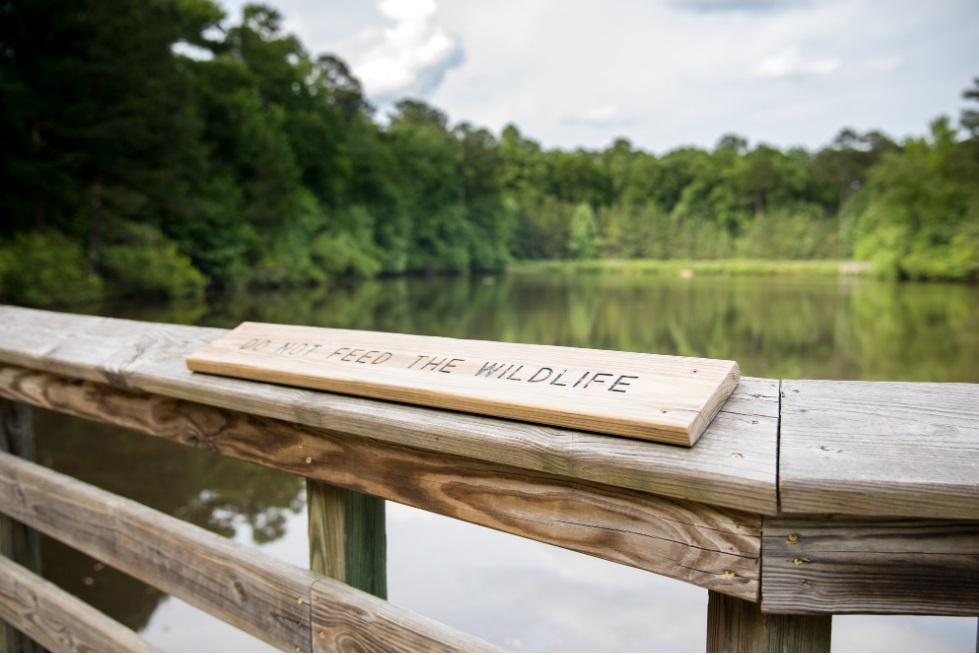 View of the pond from the wooden pond boardwalk