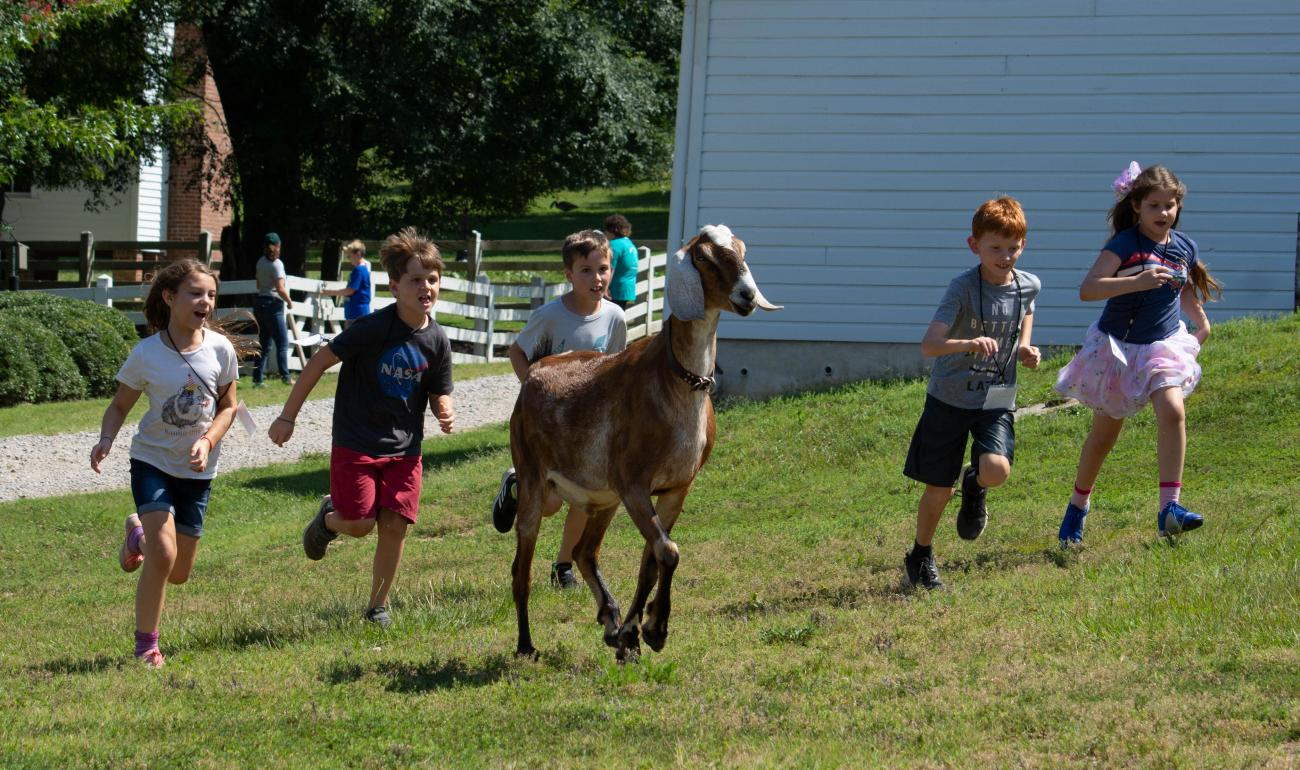 kids running with goats during farm camp