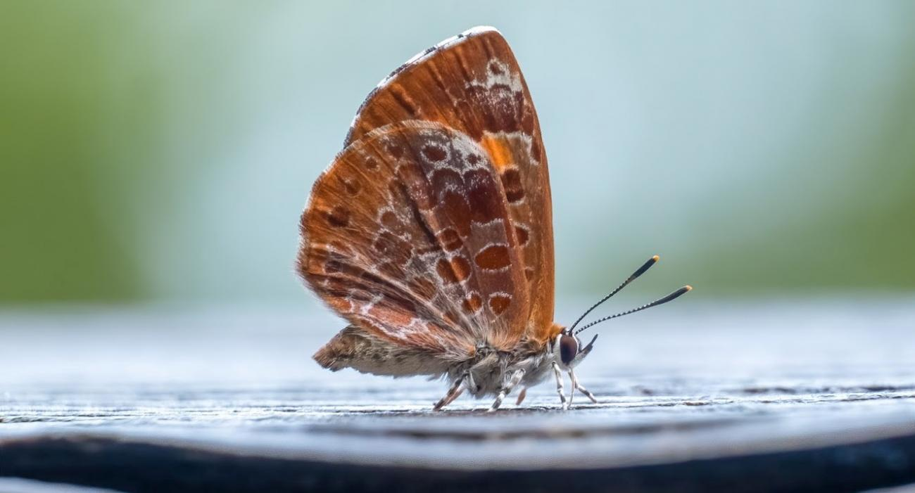 orange and white butterfly rests on wood post on a rainy day