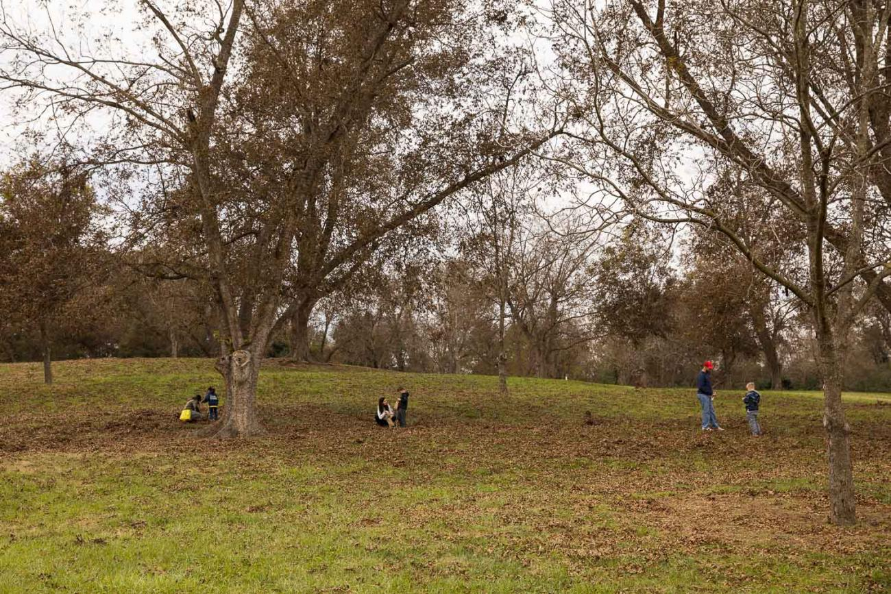 people picking pecans in the fall in Oak View's pecan grove