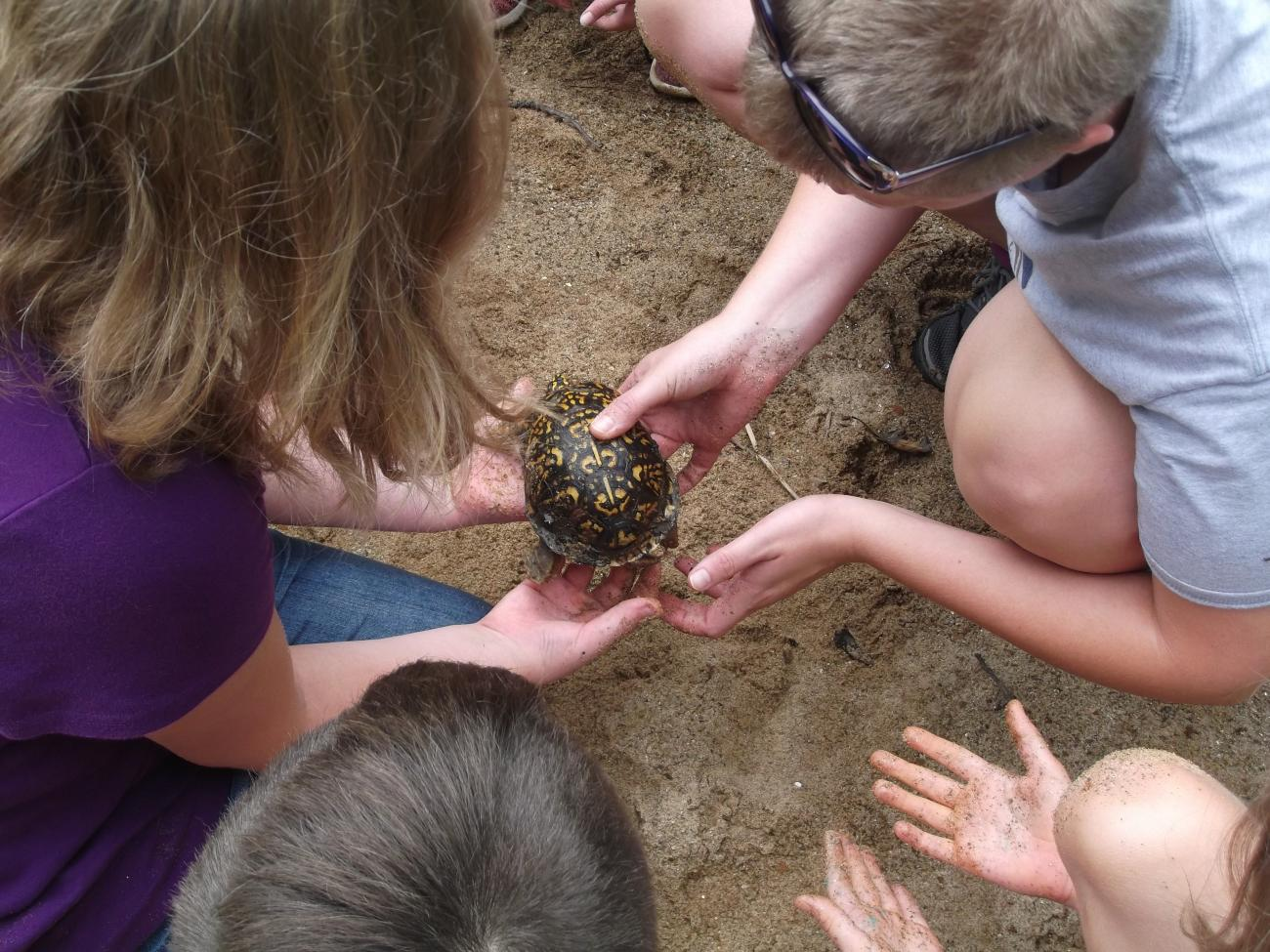 Close up of an instructor and a student looking at an Eastern Box Turtle together.