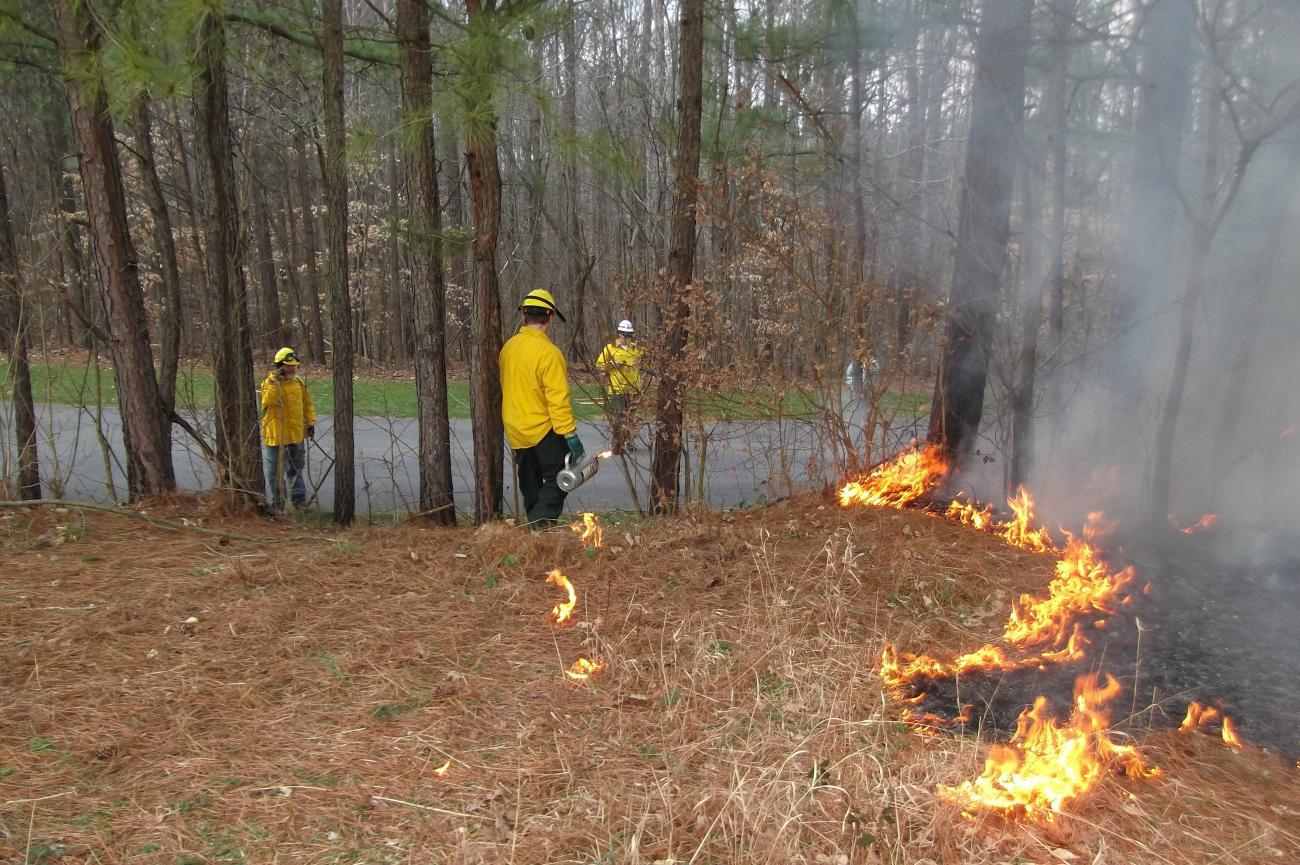 Park staff conducting a prescribed burn of meadow area.