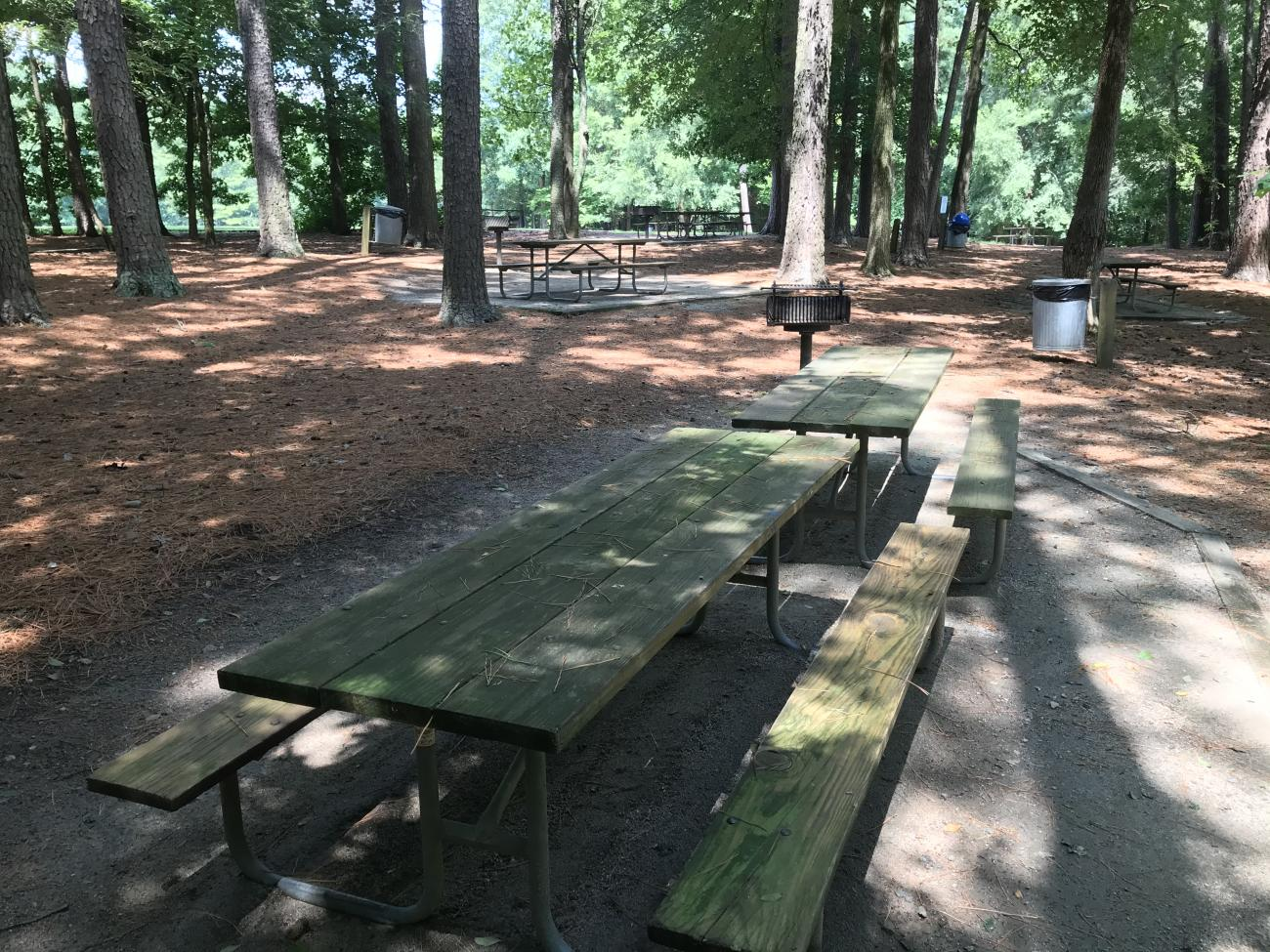 Picnic table with grill in shaded picnic area