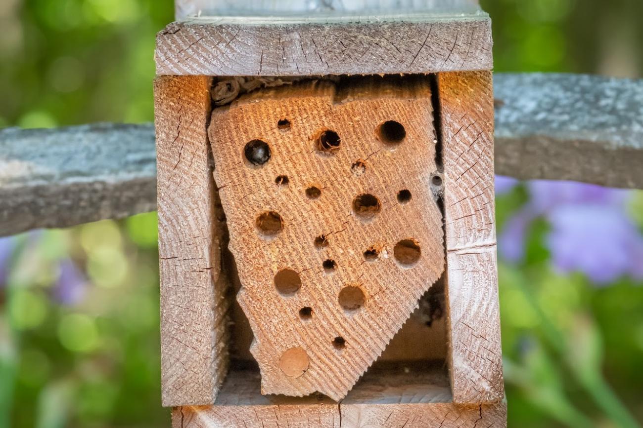 Picture of wooden bee box in park pollinator garden