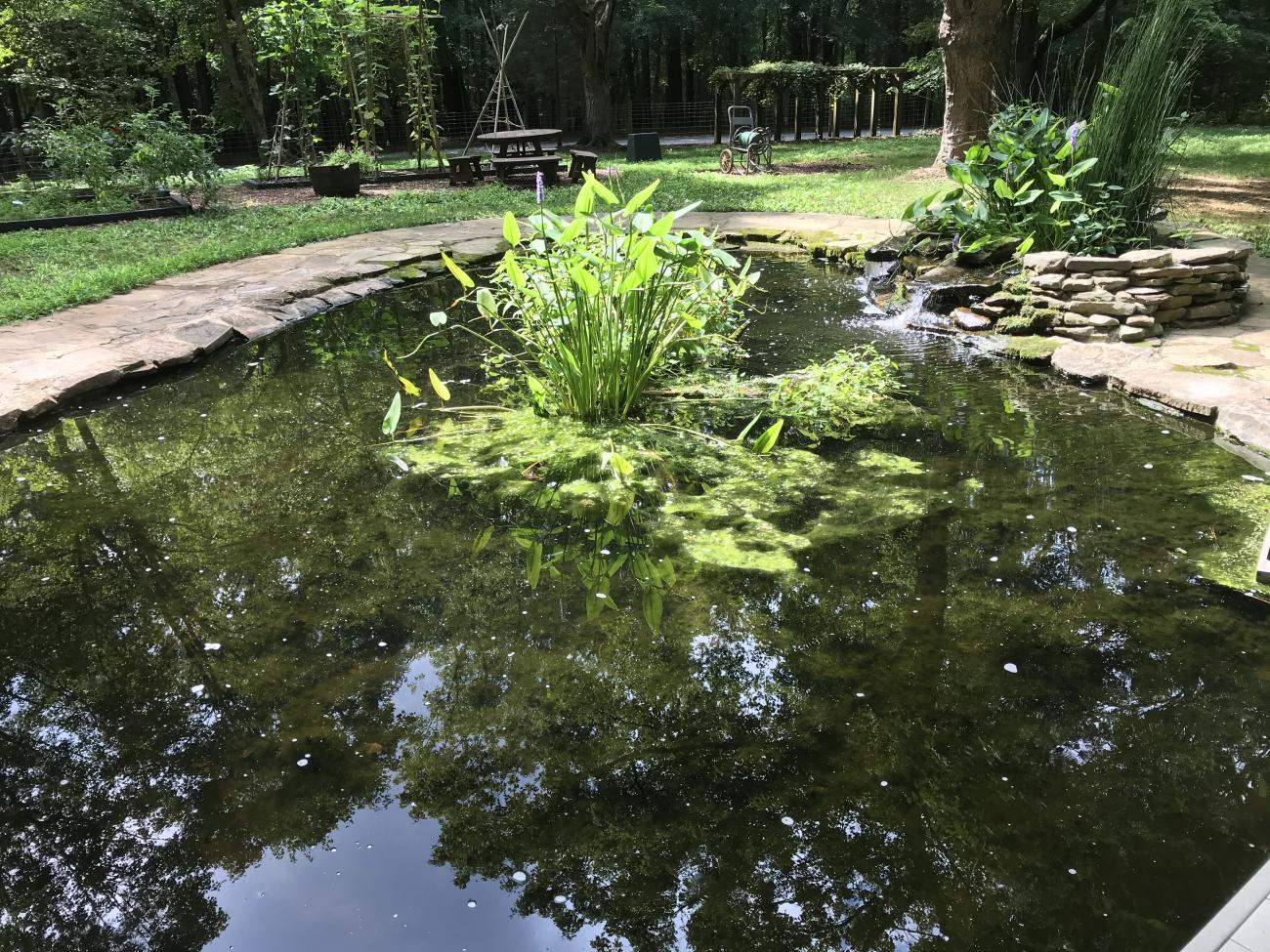 The man-made Study Pond in the Blue Jay Garden area