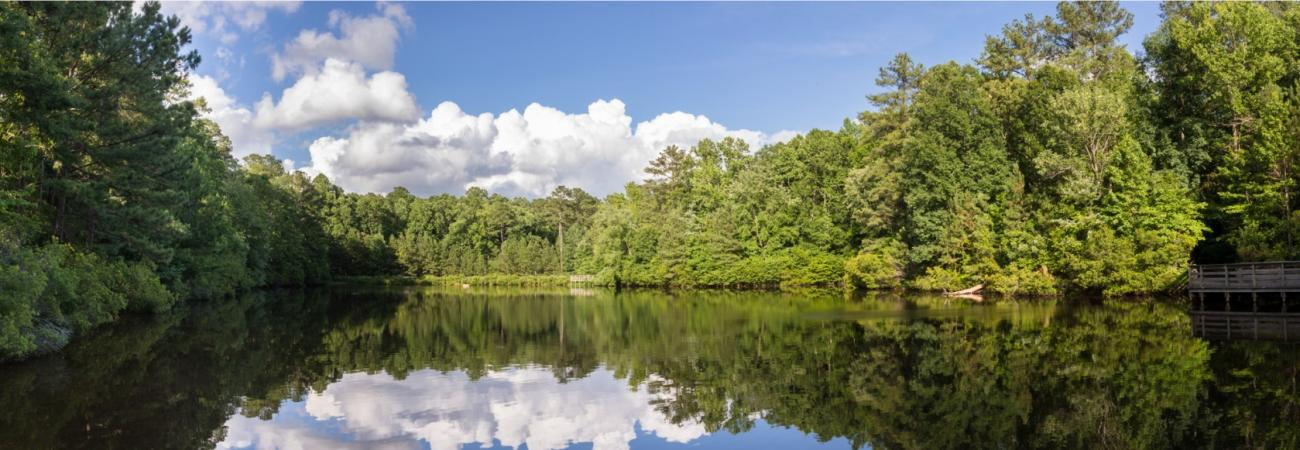 View of the pond from the boardwalk in summer with clouds reflecting in the water