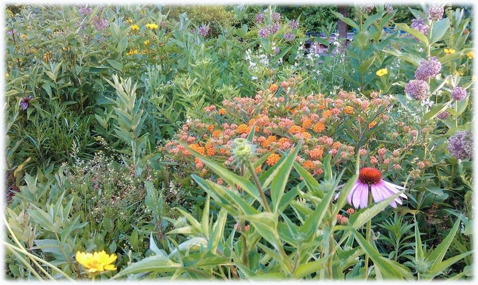 tall purple, orange, and yellow flowers are overgrown
