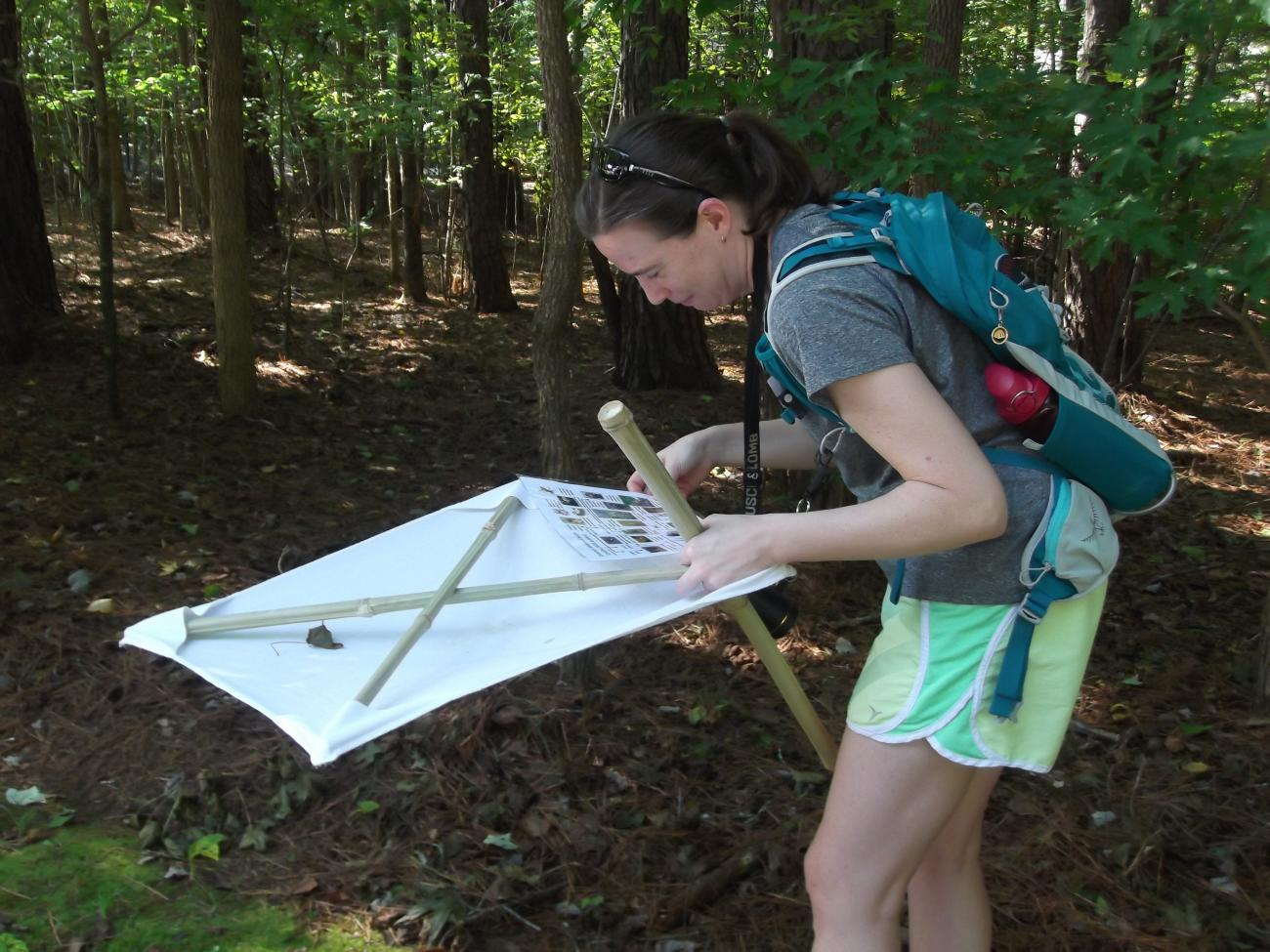 Adult workshop participant looking for spiders and small insects in a beat sheet