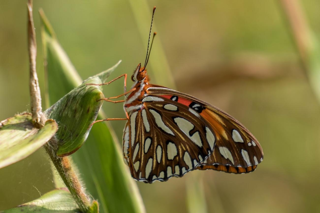 orange and white butterfly sits on plant