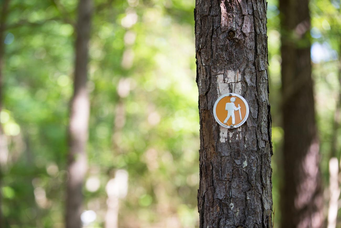 Photo of a tree with an orange blaze (marker) indicating the Peninsula Trail