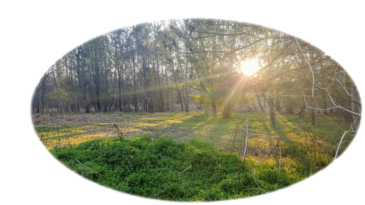 Park wetlands with trees surrounding and sun setting in background
