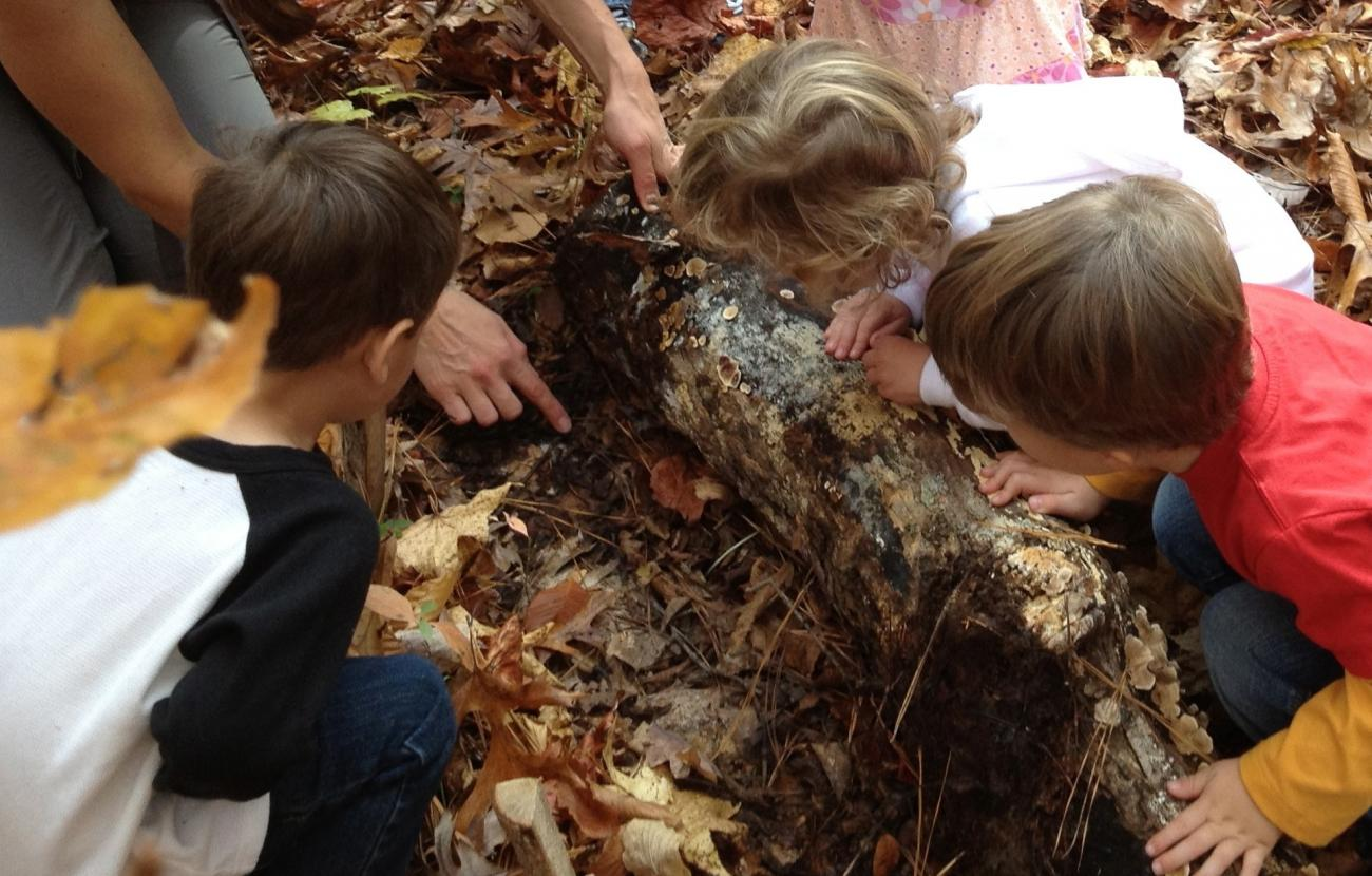 Kids looking for small living things under a rotten log