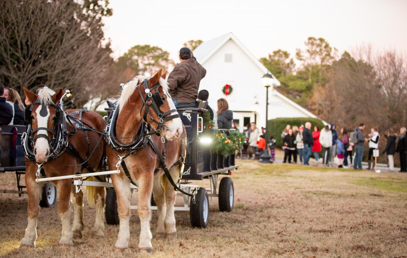 horse drawn carriage at Oak View holiday event