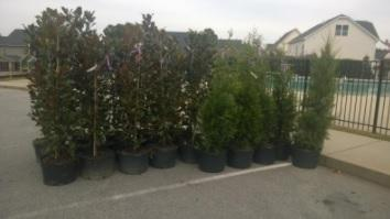 South Wake Landfill Citizens Committee Tree Planting Program