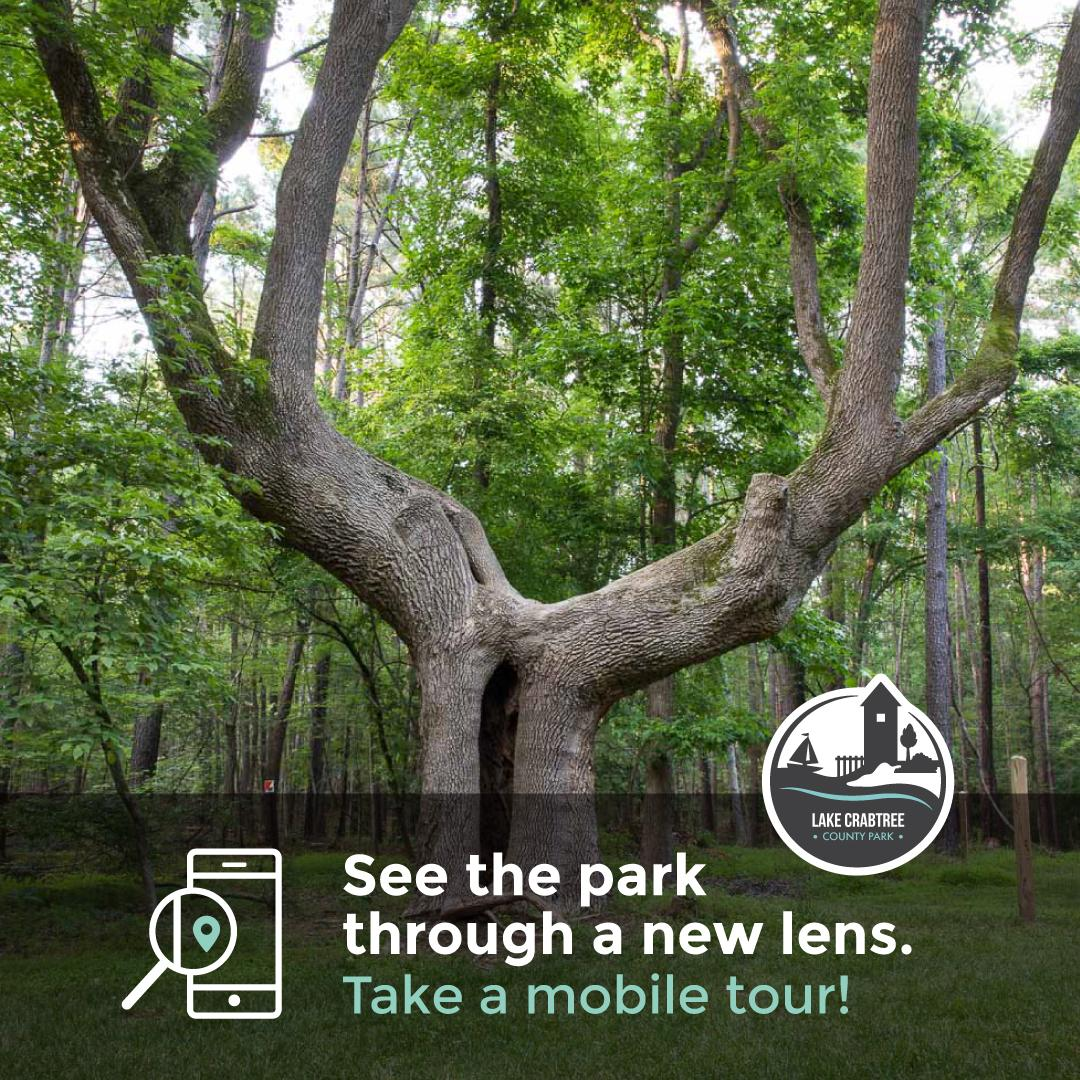 Mobile Tour graphic for Lake Crabtree Homesite