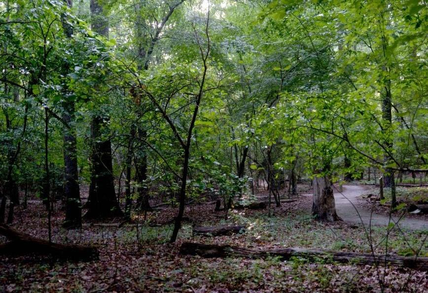 Lake Crabtree's Old Beech Nature Trail
