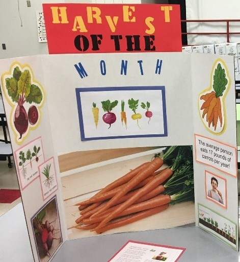 """A trifold display board with text, """"harvest of the month"""" and images of rooted vegetable."""