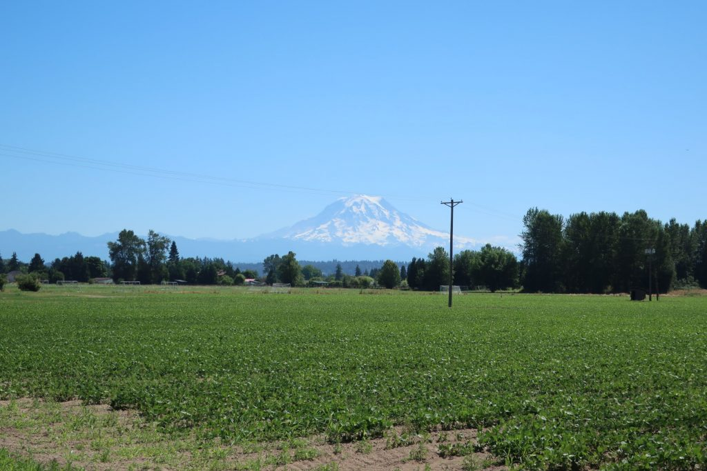Farm field with houses at the far edge, and Mt Rainier in the background
