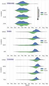 Distribution graphs comparing flooding simulations pulled of 50 years of flow dataon the Willamette, Snake and Columbia rivers. Simulations anticipate shifting streamflows earlier (and longer) in the season.