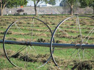 Wheels on irrigation pipe in a hay field.