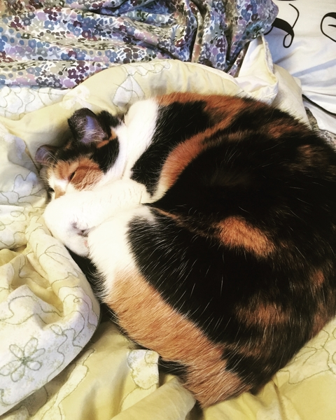 Autumn-Cat Sleeping-pet travel anxiety
