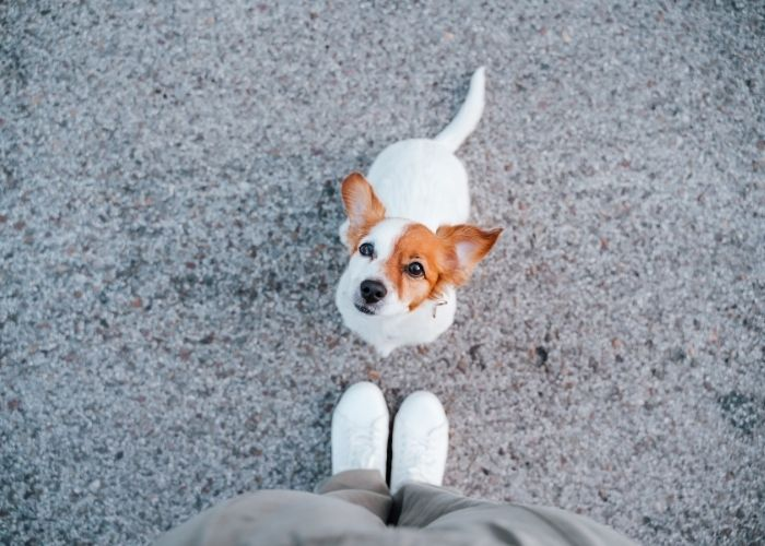 Feeding Man's Best Friend: Foods that You Can Give Dogs