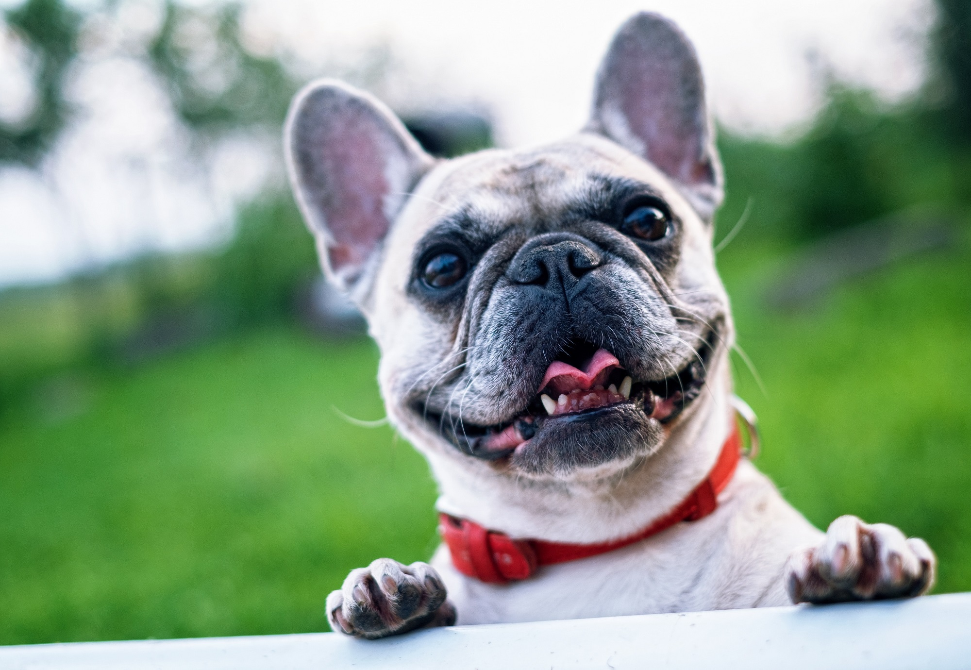 Stress-Free Pet Care in the Comfort and Convenience of Your Own Home!