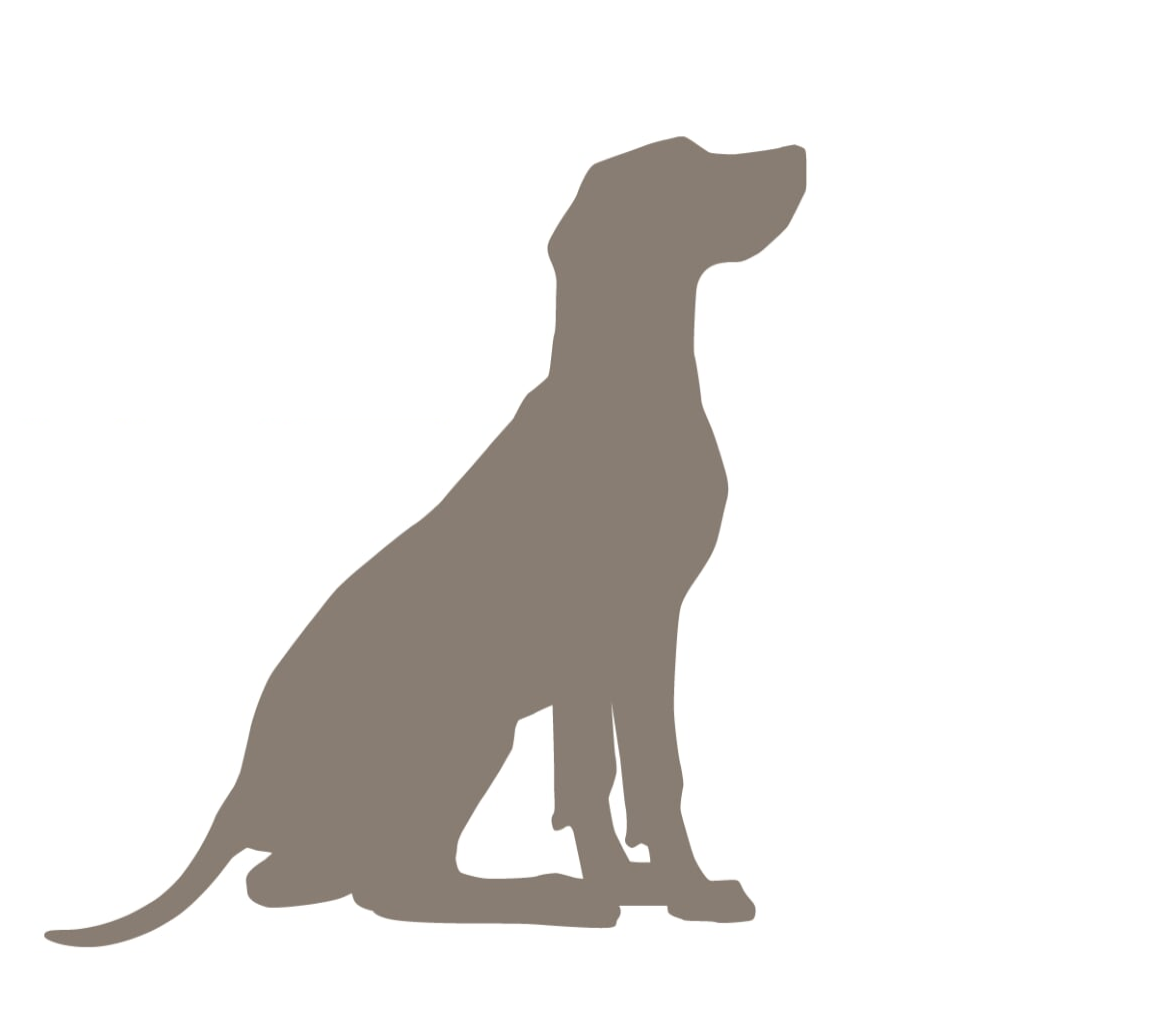 The Board Hound's Virtual Training & Behavior Consultations