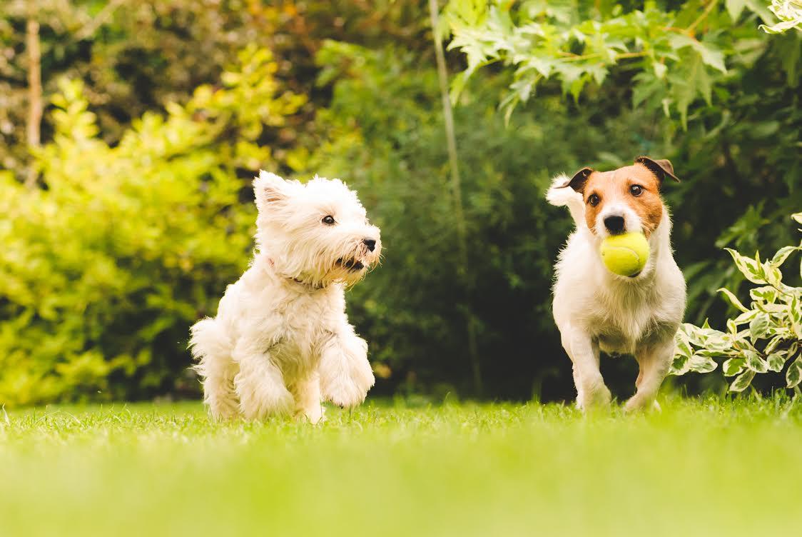 Tazzy & Boo - Dog Walking Service
