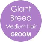 Tazzy & Boo Dog Groom - Giant Breed with Medium Hair