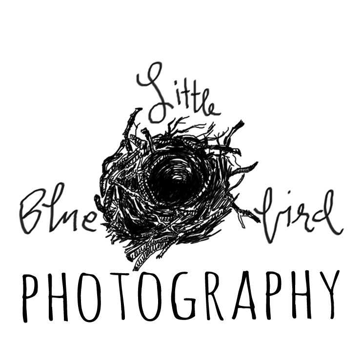 Schedule your session with Little Blue Bird Photography
