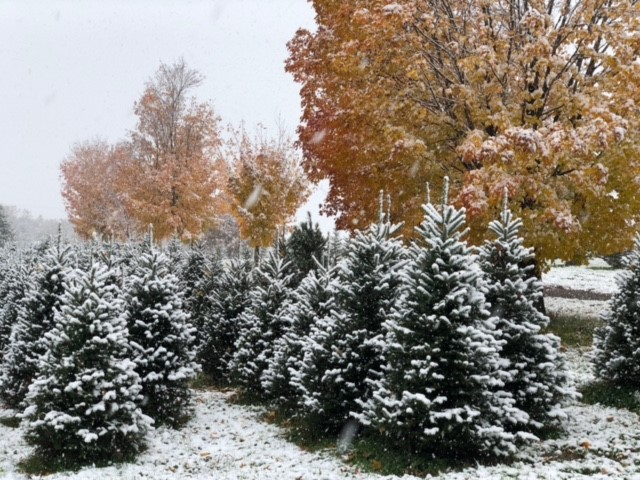 Krueger's Christmas Tree Farm - 2021 Cut-Your-Own Reservations